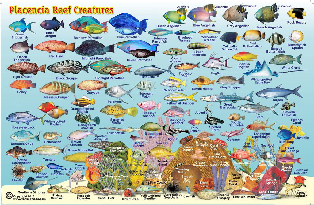 Placencia, Belize, Fish Card - Frankos Maps