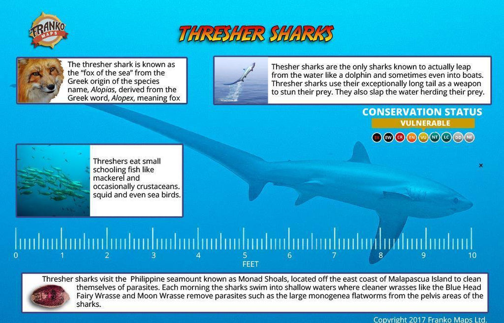 Philippines Thresher Sharks, Monad Shoal Card - Frankos Maps