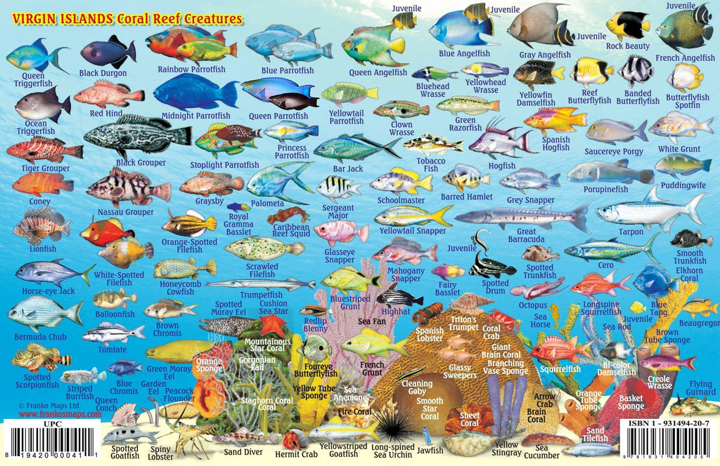 Virgin Islands Fish Card - Frankos Maps