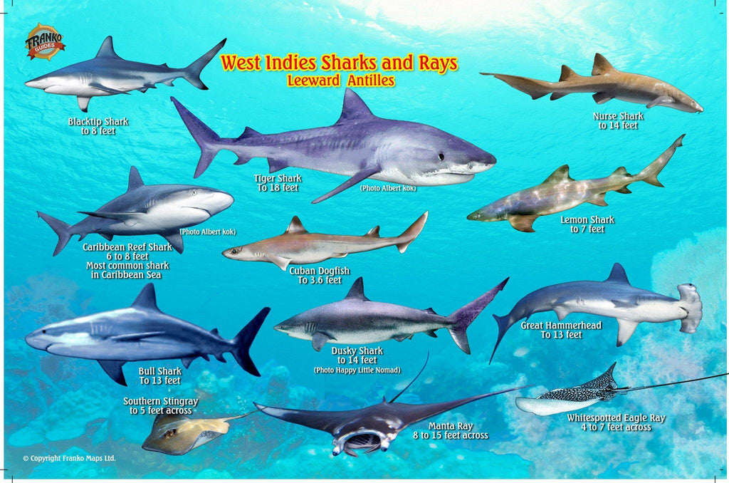 West Indies Sharks & Rays Card - Frankos Maps