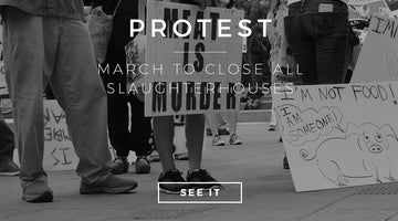 March to close all slaughterhouses - LA