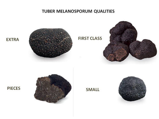 How the price per kilo of truffle is fixed