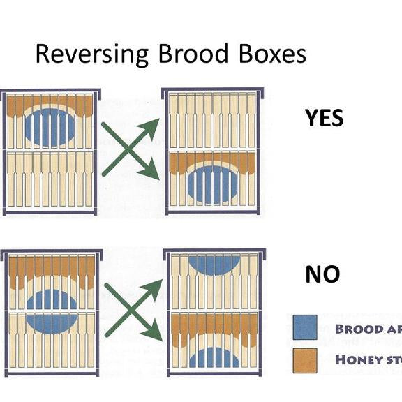 Reversing Brood Boxes