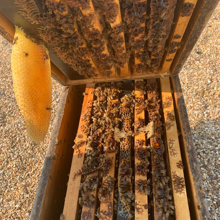 Hive Inspections- Part 2
