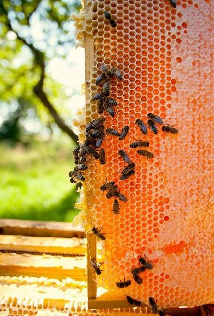 When to harvest honey from your hive