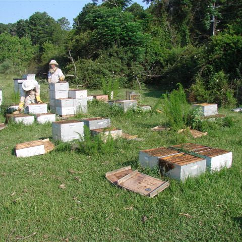 Bee Yard Shuffle- Equalizing Hives across the Bee Yard