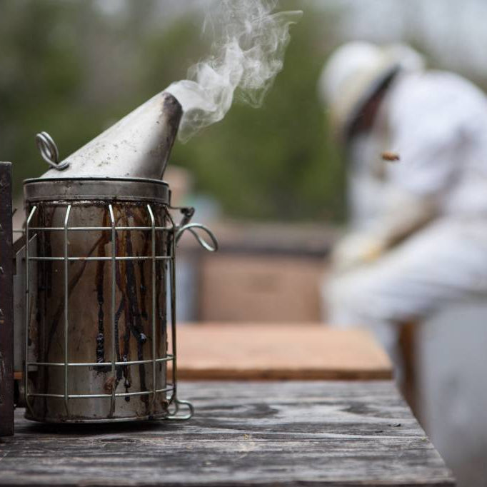 February Beekeeping Tips