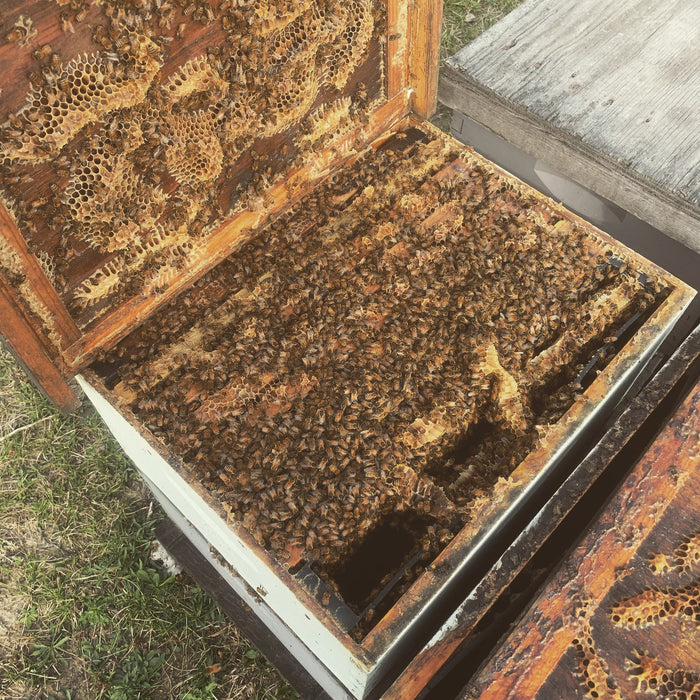 Why Every Beekeeper Should Know How to Split Hives