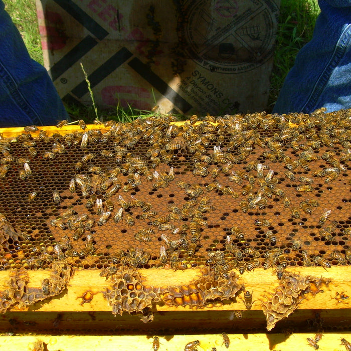 Sharing brood & fixing Hives