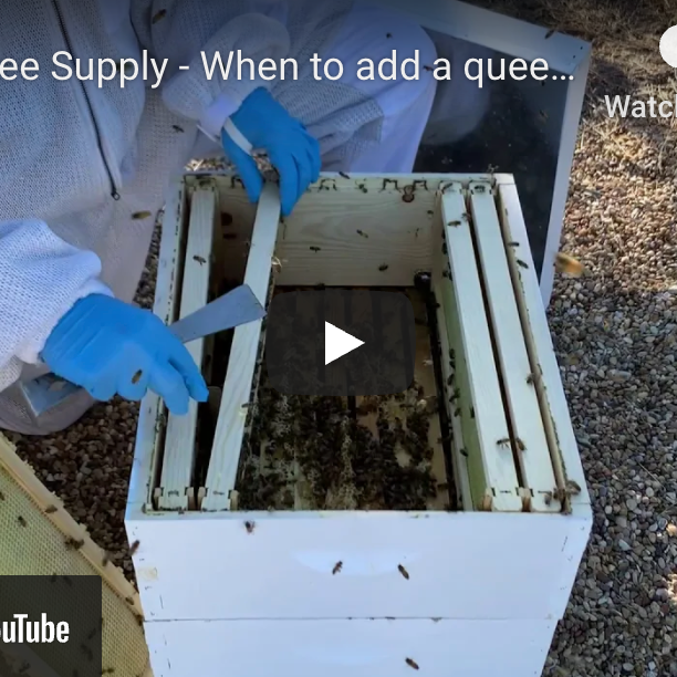 How to add a queen excluder to your hive - video
