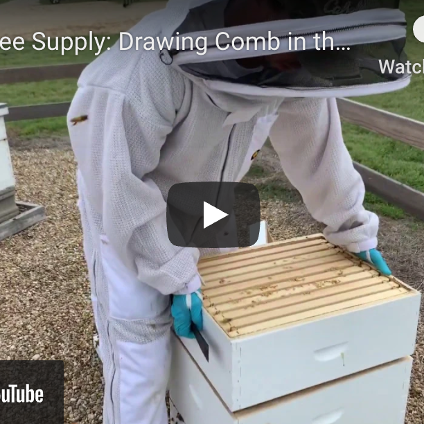 Drawing Comb in the Summer Months-Video