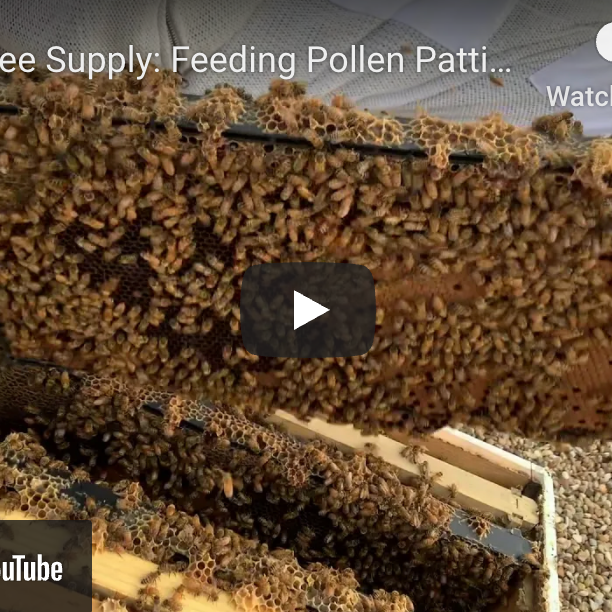 Feeding Pollen Patties in the Summer-Video