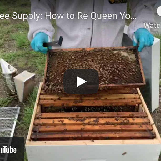How to Re-Queen Your Hive-Video