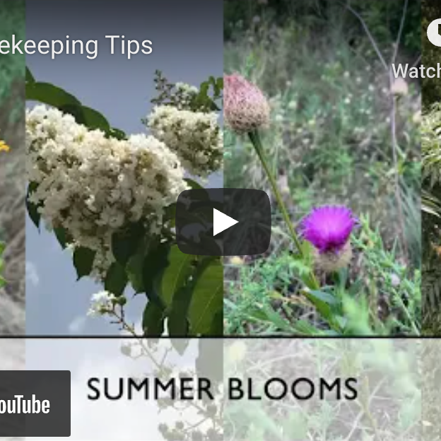 July Beekeeping Tips