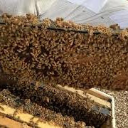 October Beekeeping Tips