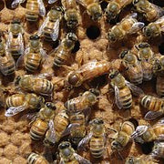 What time of year is best to requeen hives?