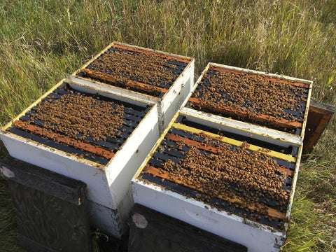 Strong hives