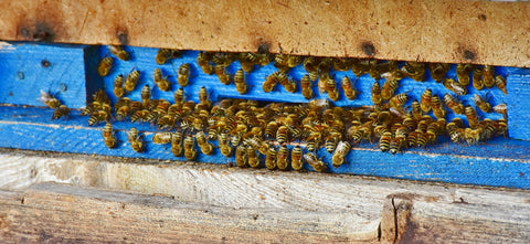 blue hive with bees