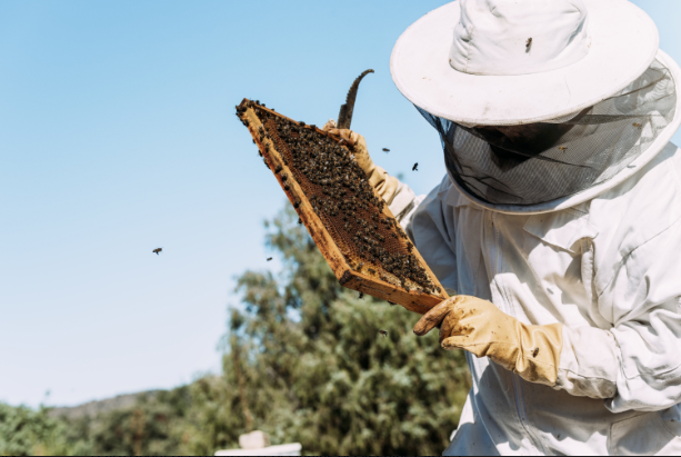 2021 Beginning Beekeeping Classes-Dayton/Huffman, TX