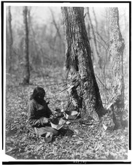 Indian woman tapping maple tree for maple sap
