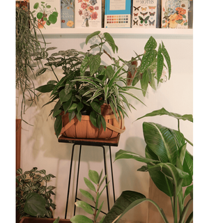 Load image into Gallery viewer, Plant Basket