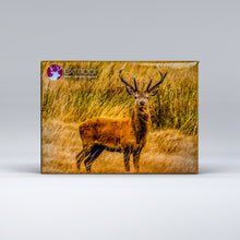 Load image into Gallery viewer, Exmoor Fridge Magnet of Red Deer Stag
