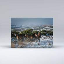 Load image into Gallery viewer, A herd of Exmoor Ponies on Winsford Hill, Exmoor