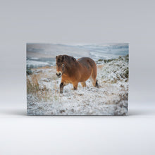 Load image into Gallery viewer, Exmoor pony in the snow