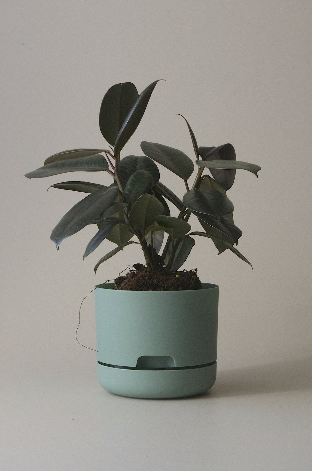 Self-watering Pot 250mm
