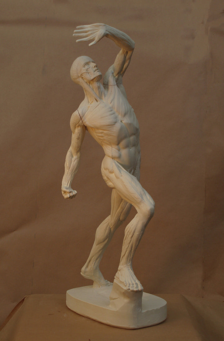 Underneath the Skin: The Anatomical Men