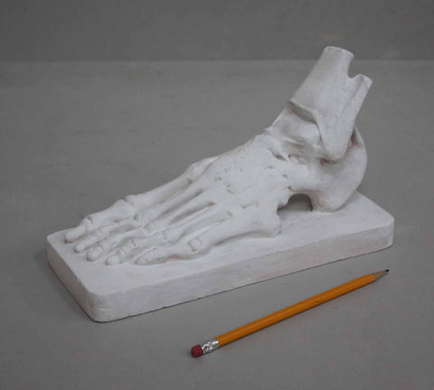 photo with gray background of plaster cast sculpture of flayed left foot on a rectangular base and a yellow pencil laying nearby