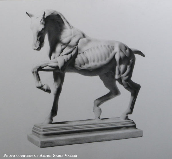 Cast Drawing of Anatomical Horse