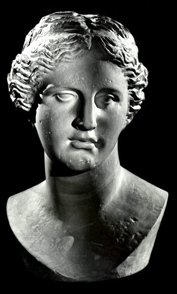 photo with black background of plaster cast bust of woman with up-do, namely Venus