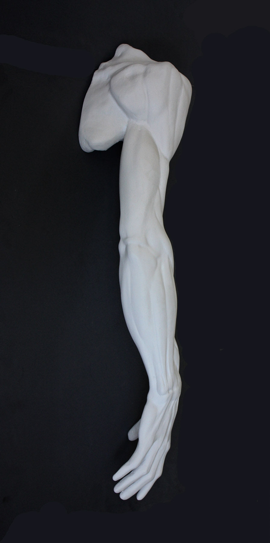 Photo of plaster cast sculpture of flayed arm with a black background