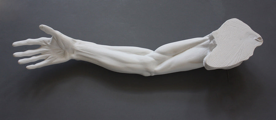 Photo of plaster cast sculpture of flayed arm with a gray background