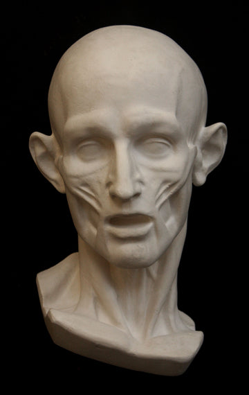 Photo of plaster cast sculpture of flayed head with black background