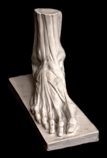 Anatomical Male Foot - Item #155