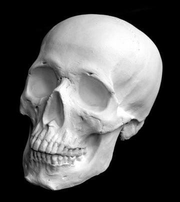 Photo of plaster cast of sculpture of a skull on a black background
