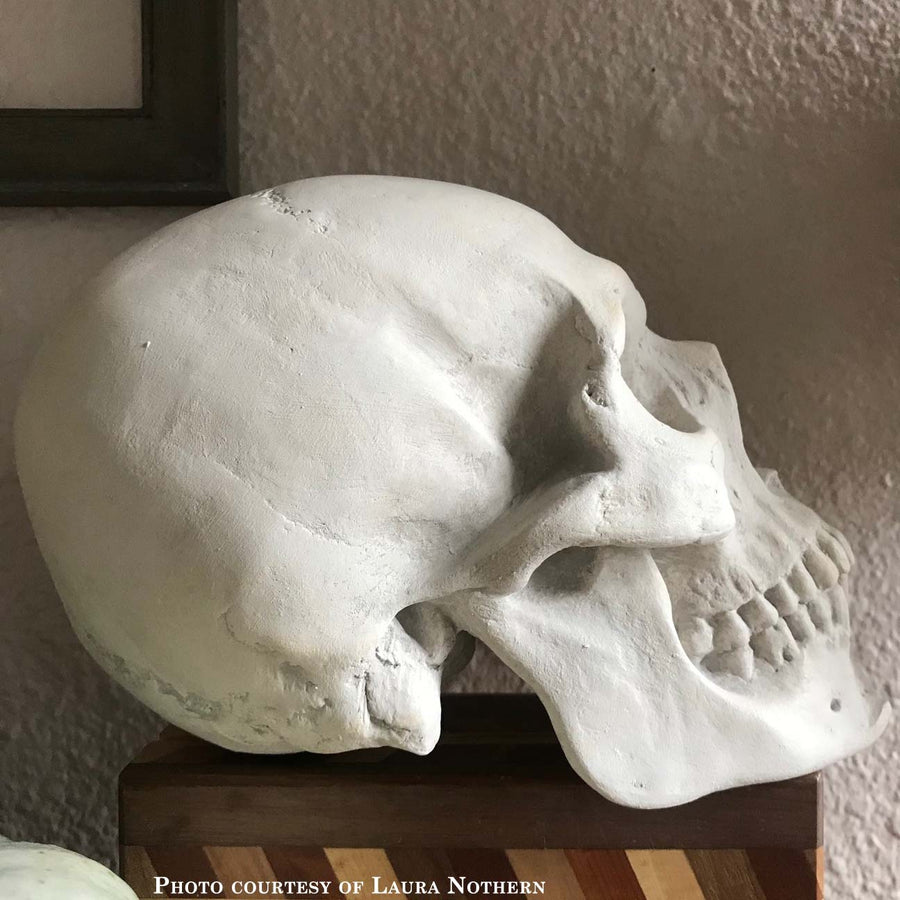 Photo of plaster cast of sculpture of a skull on a box with a white wall in shadow