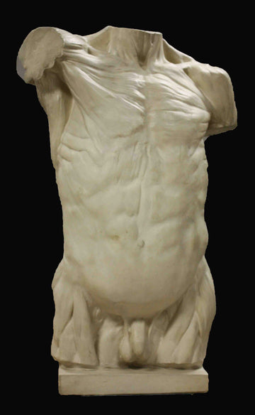 photo with black background of plaster cast of sculpted flayed male torso