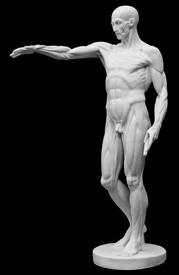 photo of plaster cast sculpture of flayed male figure study with right arm outstretched and left arm down on a black background