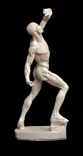 Anatomical Man (New) - Item #626