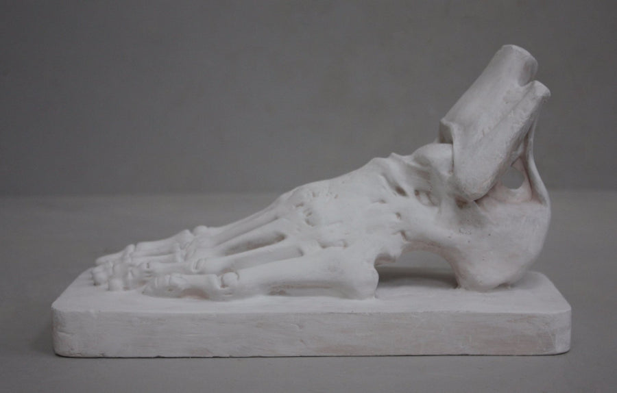 photo with gray background of plaster cast sculpture of flayed left foot on a rectangular base