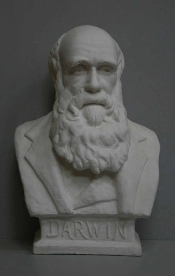 photo with gray background of plaster cast bust of man with suit jacket and long beard