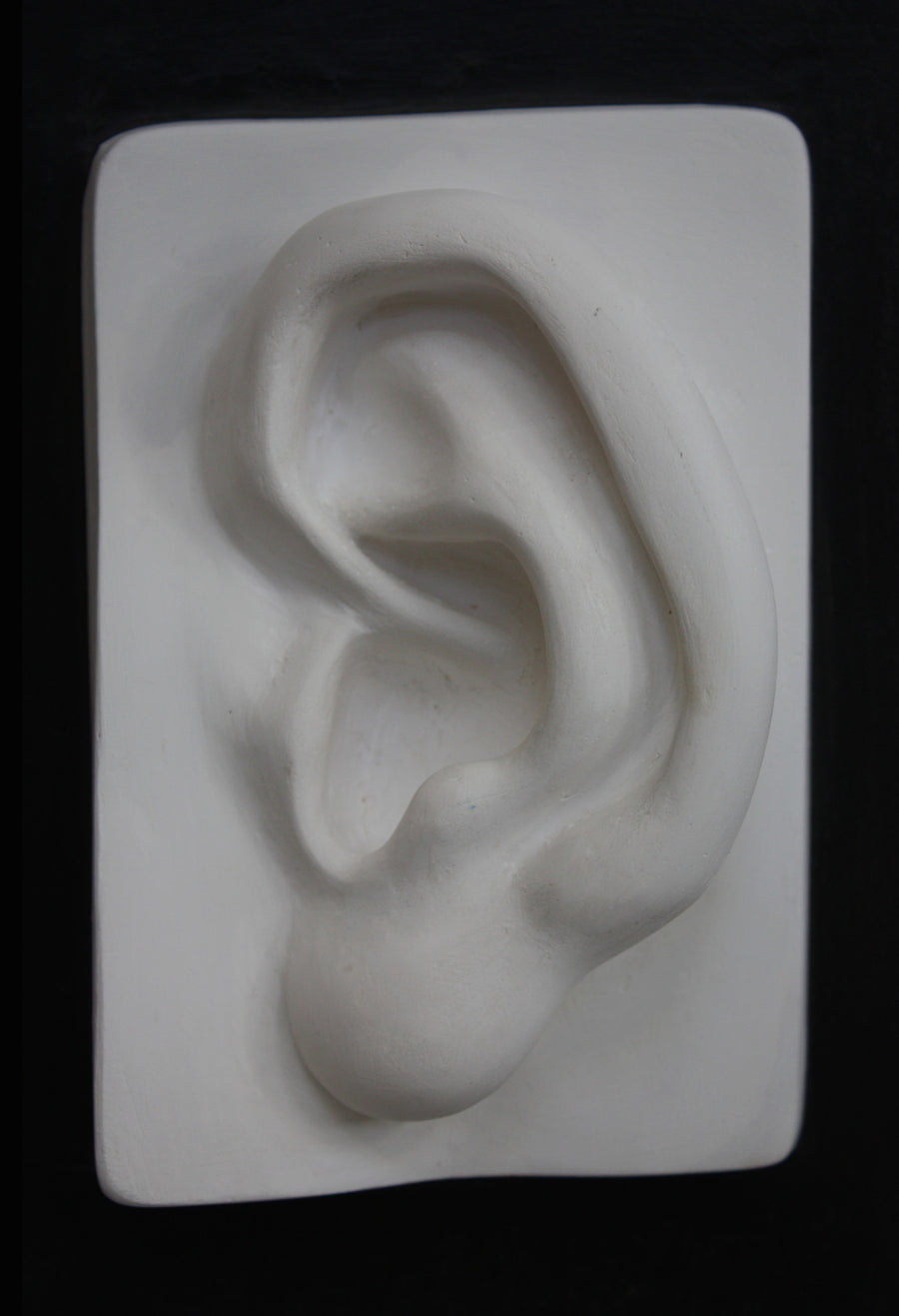 David Reduction Detail - Ear, Left - Item #768