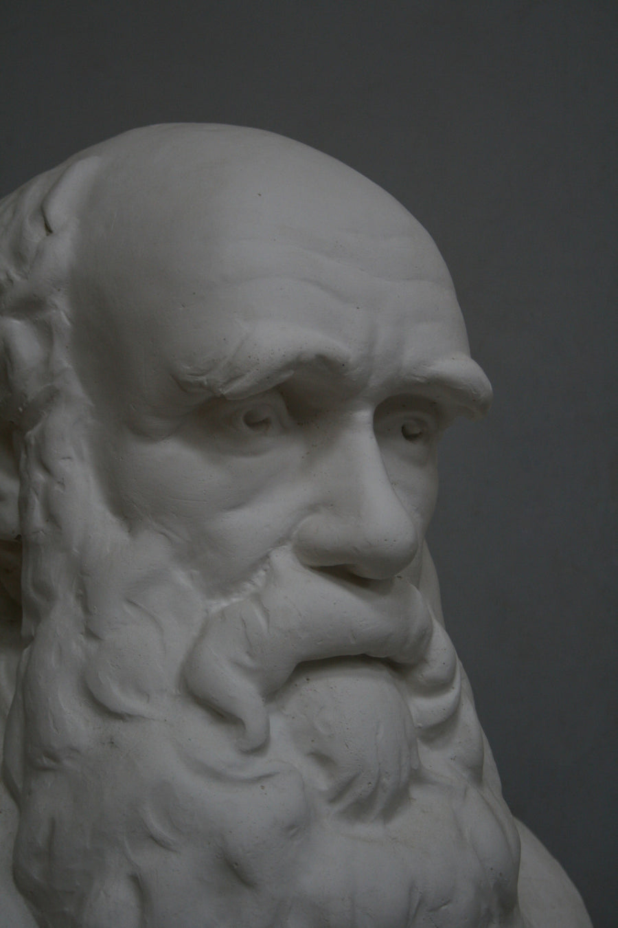 closeup photo with gray background of plaster cast bust of man, namely Charles Darwin, with suit jacket and long beard