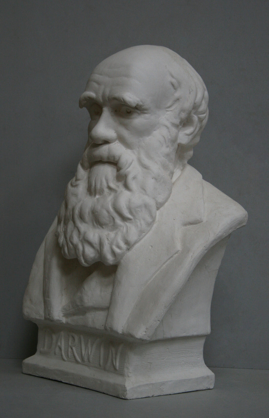 photo with gray background of plaster cast bust of man, namely Charles Darwin, with suit jacket and long beard