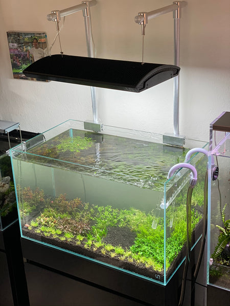 Dutch Aquascape Tank Build At Hakkai Aquascape Design Gallery