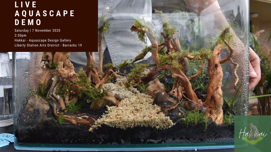 Free Demo: Learn How To Aquascape