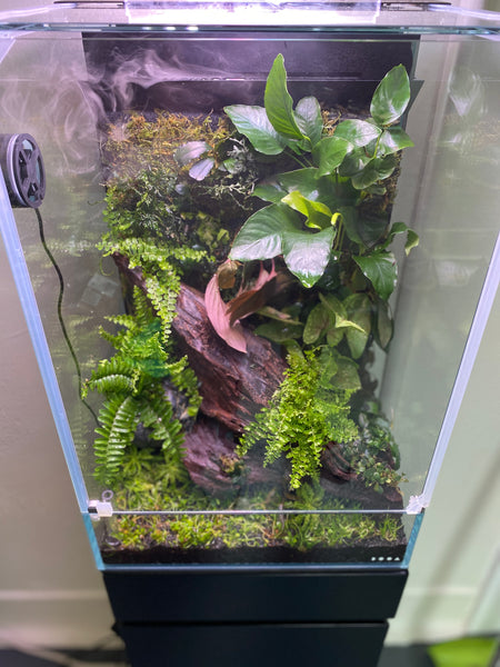 Setting Up The New ADA DOOA Paluda 30 System Paludarium Aquascape